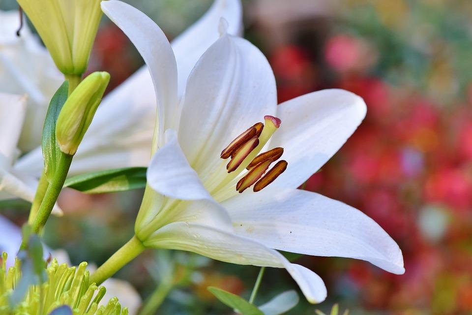 Quelles sont les fleurs à planter au printemps ?